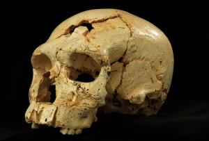 Cranium 16 Sima de los Huesos Atapuerca