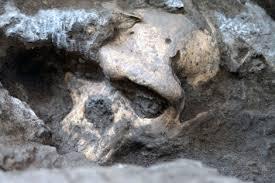 cráneo 5 dmanisi