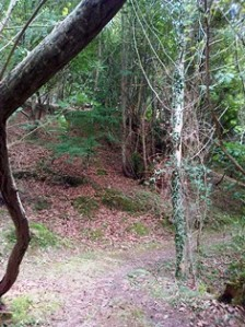 chufin-bosque