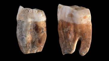 molares-neandertales