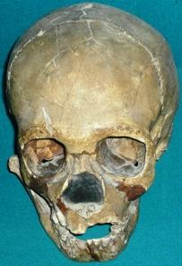 Skull_of_Teshik-Tash_Boy