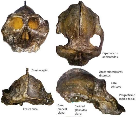 black-skull