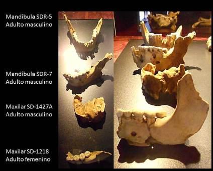 Neandertales El Sidrón