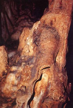 Cueva El Castillo. Hombre-bisonte