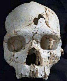 Cráneo 17 Sima de los Huesos, Atapuerca