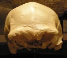 Cráneo 4 Sima de los Huesos, Atapuerca