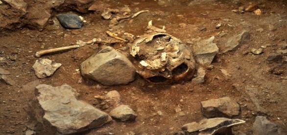 Esqueleto Montgó