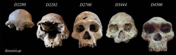 Dmanisi skulls