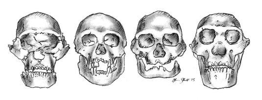 Dmanisi skulls sketch