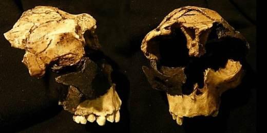 Homo antecessor ATD6-15 y ATD6-69
