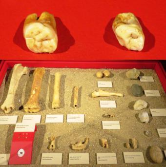 Neandertales Cueva de la Buena Pinta, Pinilla del Valle