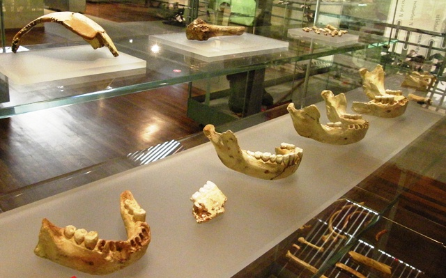 Restos homininos de Sima de los Huesos