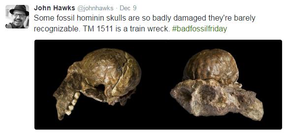 #FossilFriday 2