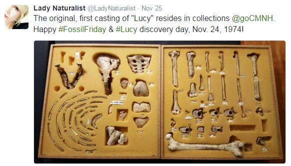 #FossilFriday 3