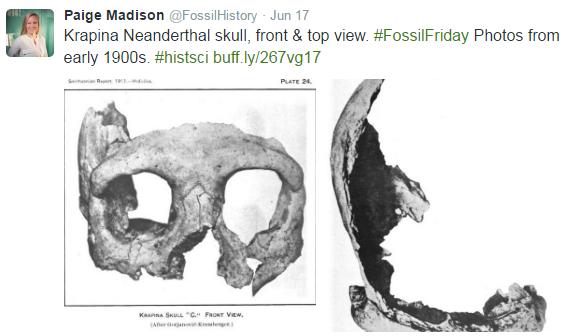 #FossilFriday 8