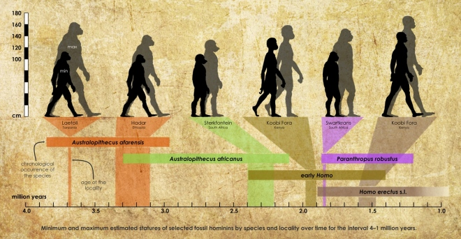Tallest and smallest hominins