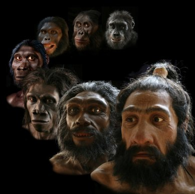 Natural History Museum's Hall of Human Origins