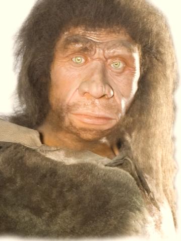 Neandertal MNCN
