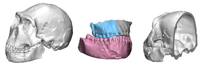 Modelo 3D cráneo Homo naledi