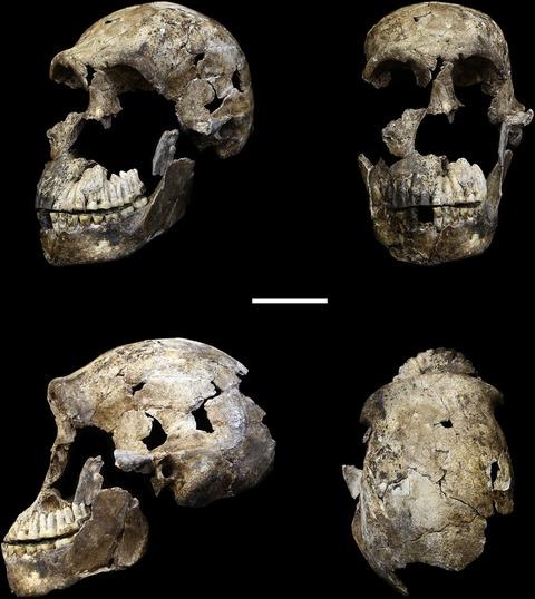 Homo naledi cranium