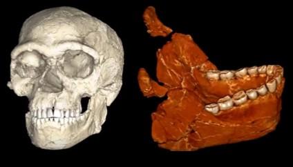 Jebel Irhoud cráneo y mandíbula