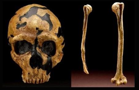 Resultado de imagen de Es cierto que los fósiles originales de la cueva de Zhoukoudian