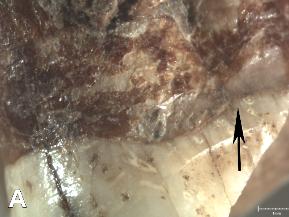 Neandertal Cova Foradà