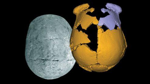 Cráneos de Xuchang