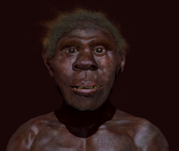 Paleoart John Bavaro. Turkana Boy