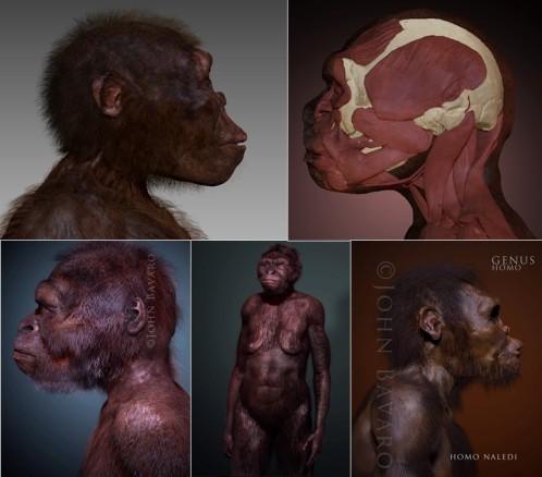 Paleoart John Bavaro. Homo naledi