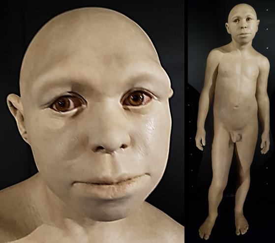 Homo antecessor (MEH)