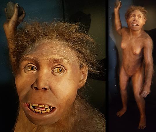 Homo georgicus (MEH)