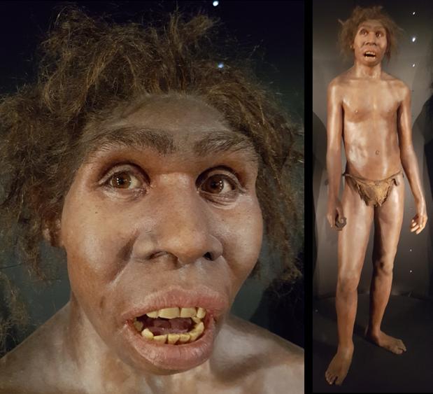 Los cuerpos estilizados de Homo erectus, no lo erantanto