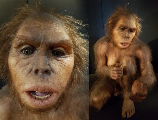 Homo habilis (MEH)