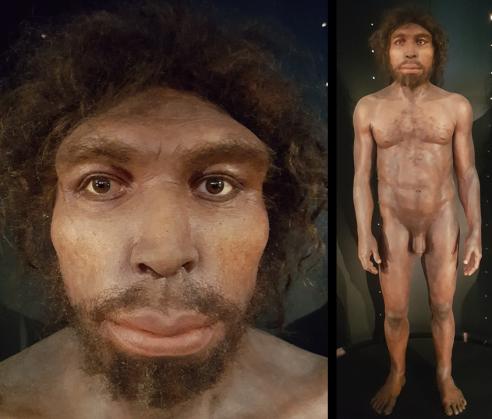 Homo rhodesiensis (MEH)