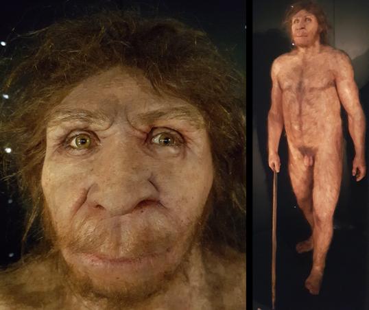 Homo heidelbergensis?? (MEH)
