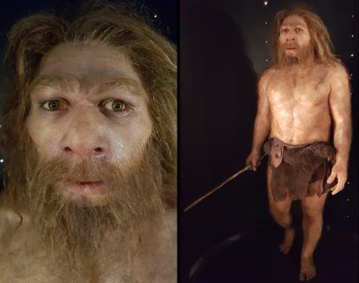 Homo neanderthalensis (MEH)