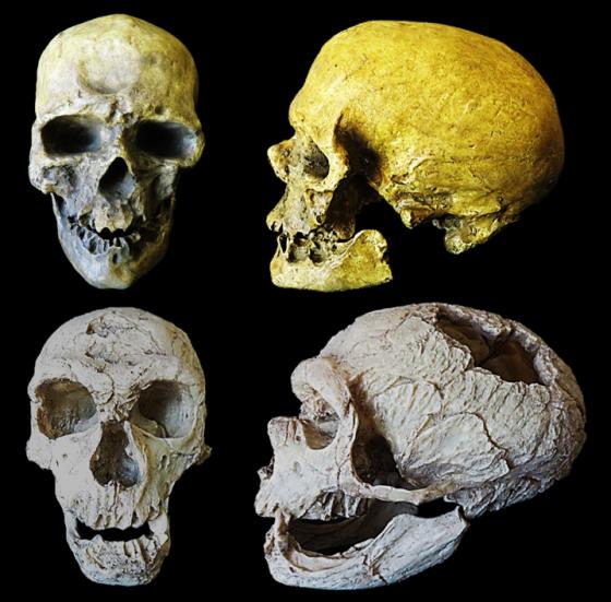 Neandertales cromañones