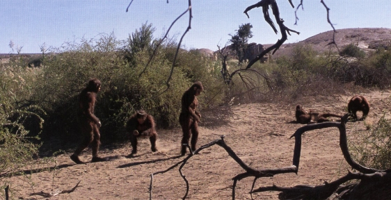 Paranthropus group