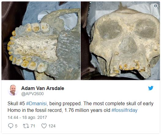 Hominin #FossilFriday