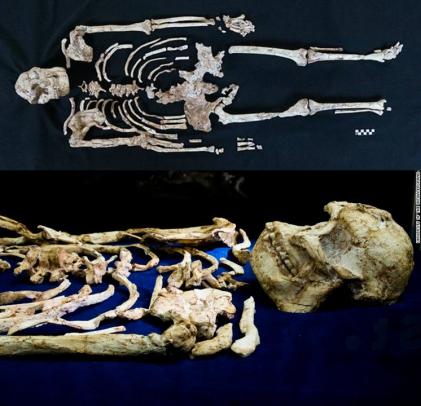 Esqueleto de Little Foot