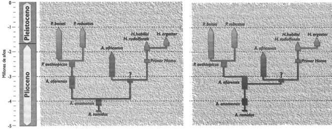 Primeros homininos La especie elegida