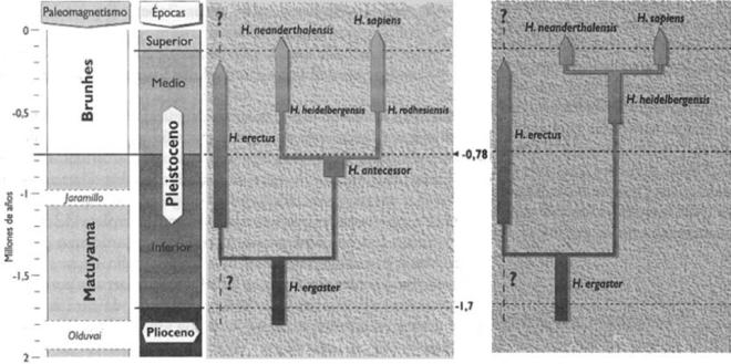 Esquema evolutivo Eurasia. La especie elegida