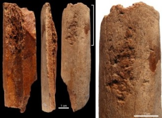 Bone tools from Lingjing, Henan, China