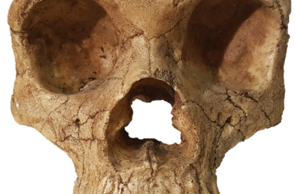 Nariz Gibraltar-1 neandertal