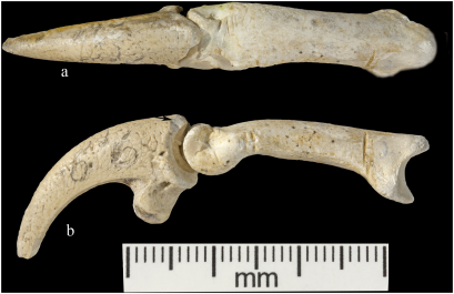 Neandertal Jewelry Krapina