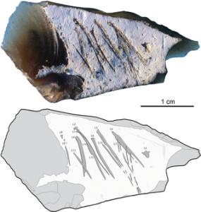 Engraved flint flake from Kiik-Koba layer IV