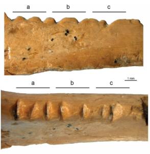 Decorated raven bone from Zaskalnaya VI