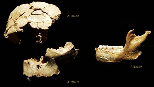Homo antecessor TD6 Gran Dolina