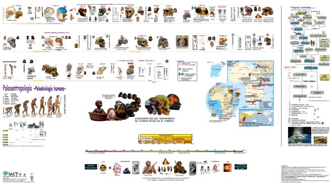 Póster Paleoantropología
